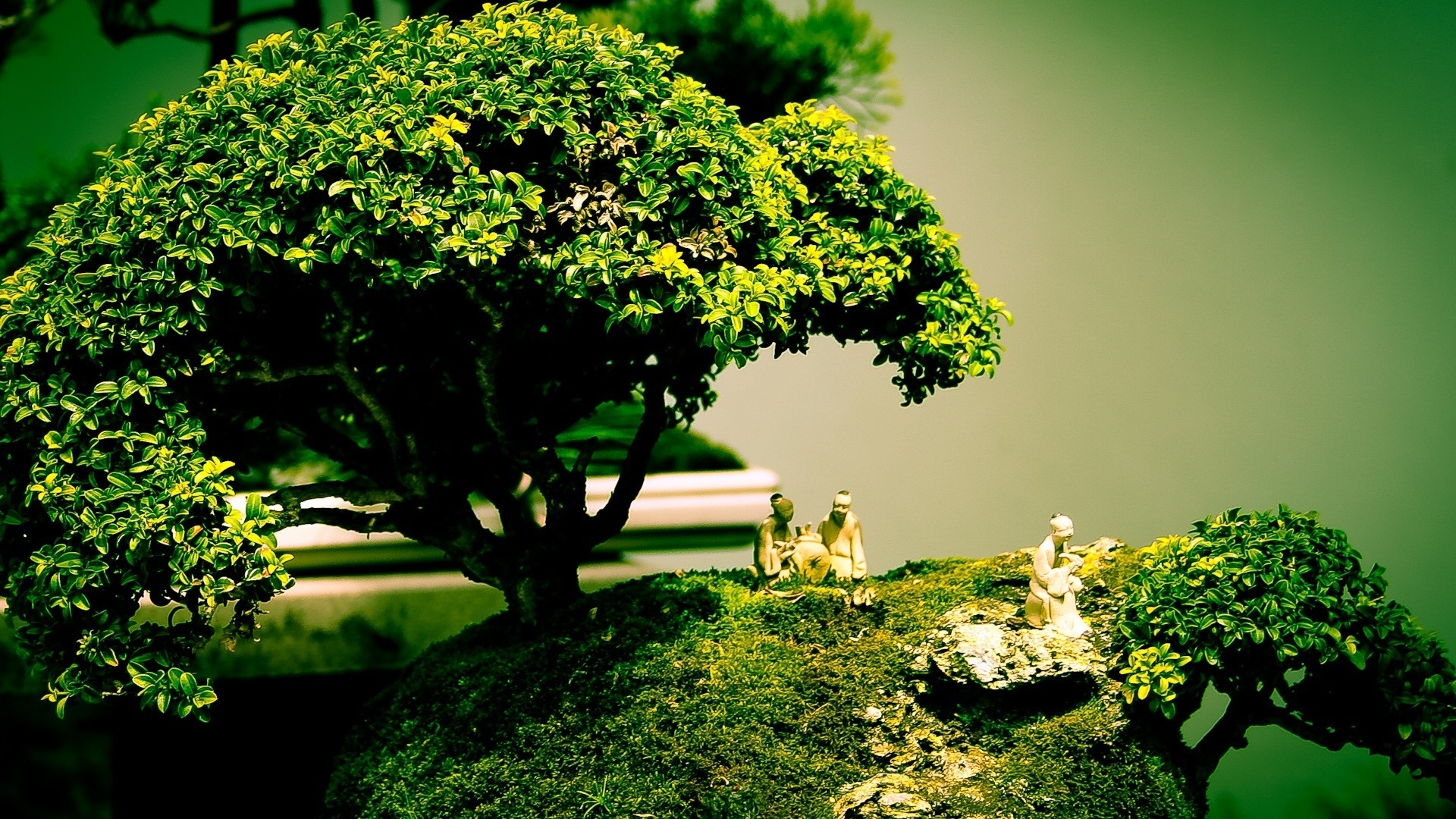 hd-wallpaers-of-bonsai-tree