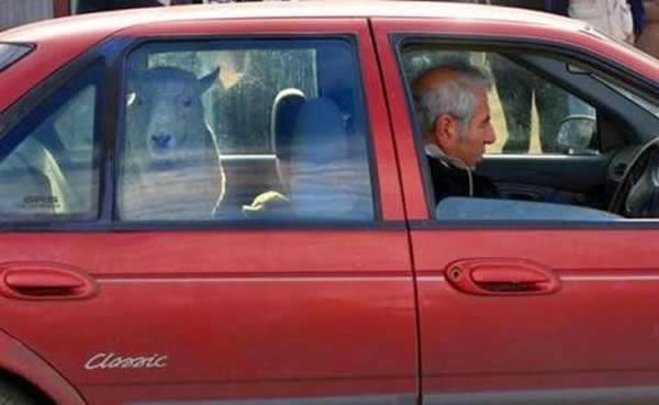 12-Crazy-Photos-Of-Animals-In-Transport-10