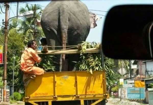 12-Crazy-Photos-Of-Animals-In-Transport-11