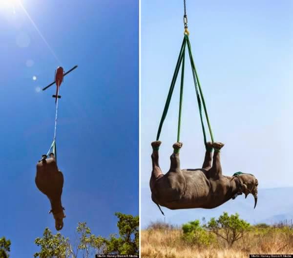 12-Crazy-Photos-Of-Animals-In-Transport-7