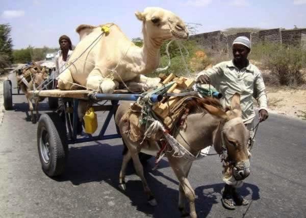 12-Crazy-Photos-Of-Animals-In-Transport-9