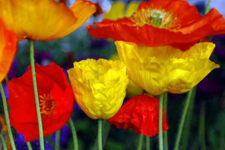 Sevdiklerinize Bir Çiçek Sepeti Hazırlayın