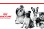 En İyi Kedi Maması Markalarından Biri Royal Canin Mamalar