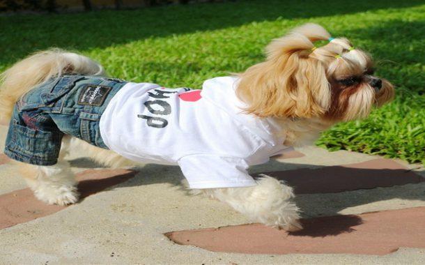 2020'nin En Tatlı Köpek Kıyafetlerine Göz Atın!