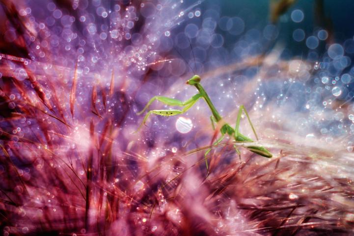 Nefis Makro Fotoğraflar Böceklerin Minyatür Dünyası