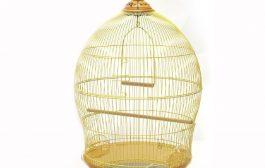 Kaliteli ve Doğru Kuş Kafesi Nasıl Seçilir?